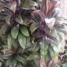 Photo: Ti-Plant